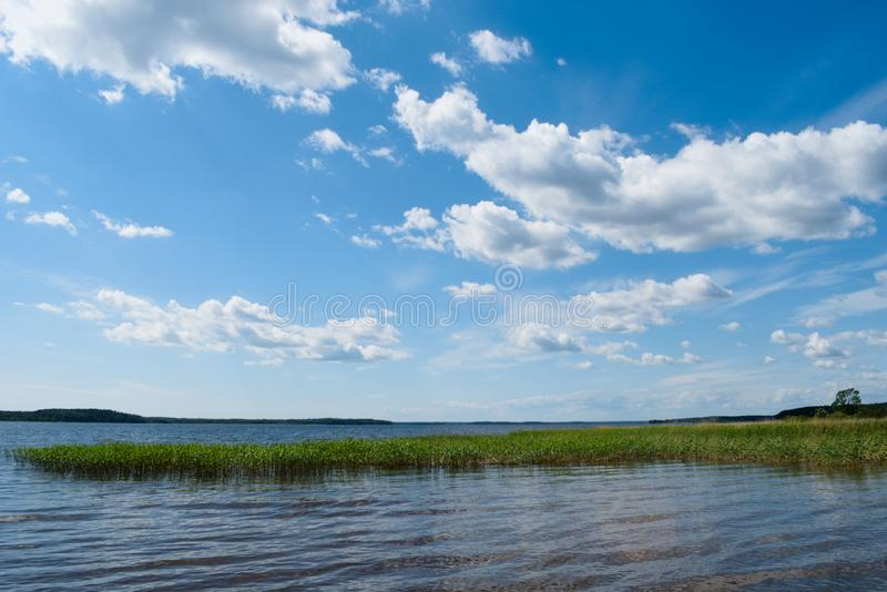 Cielo azul con las nubes La hierba verde crece en el lago imágenes de archivo libres de regalías