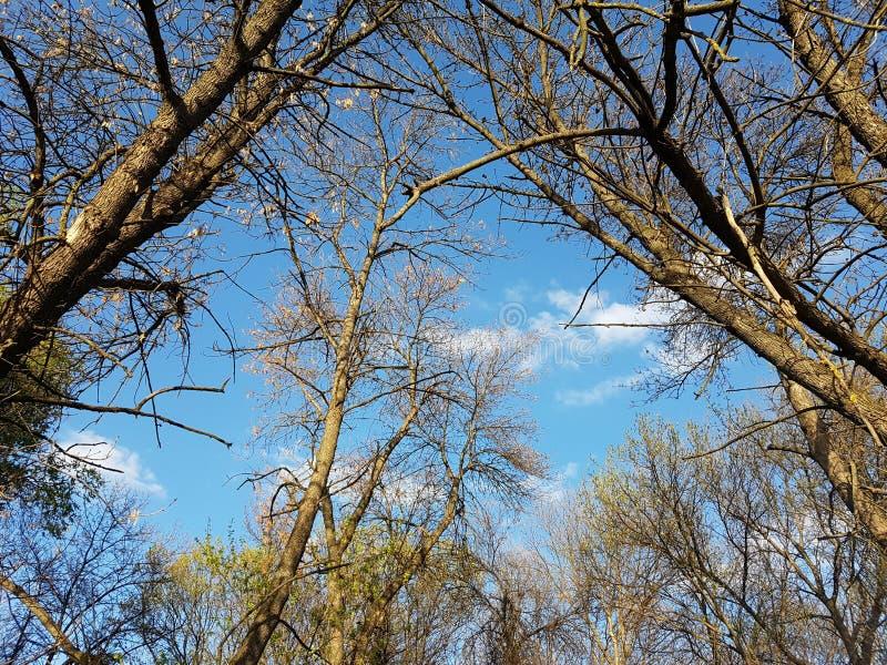 Cielo azul con los árboles en tiempo del otoño de la primavera imagenes de archivo