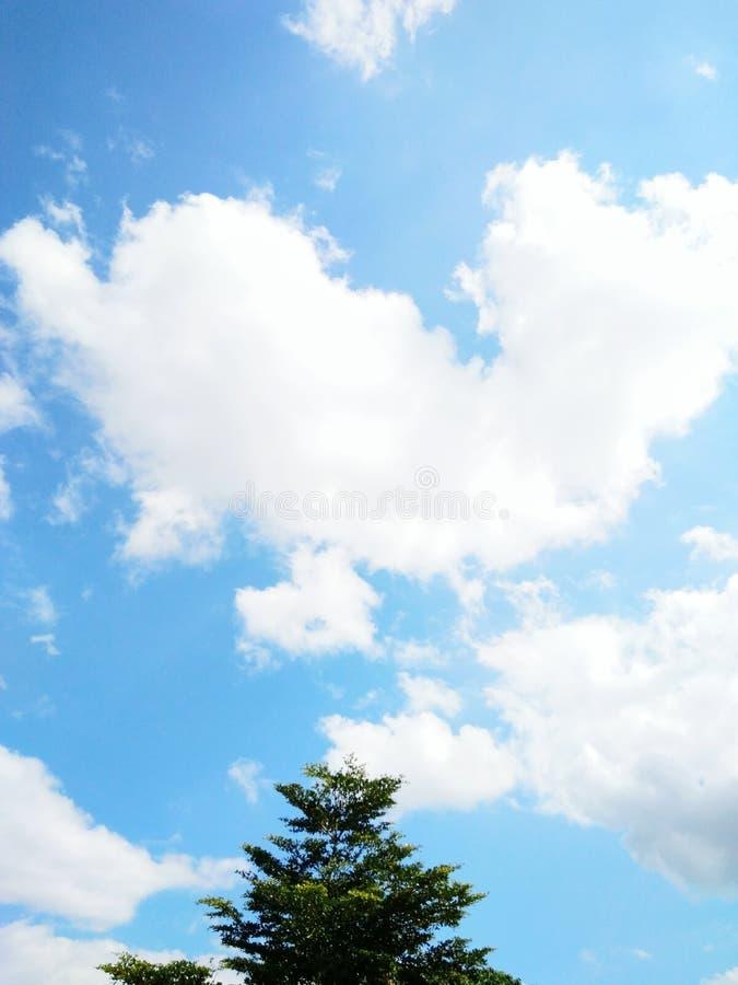 cielo azul con poco árbol fotografía de archivo libre de regalías