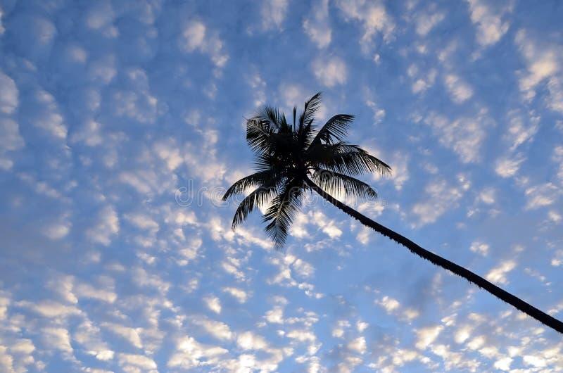 Cielo azul de la puesta del sol nublada con la palmera por el mar fotos de archivo