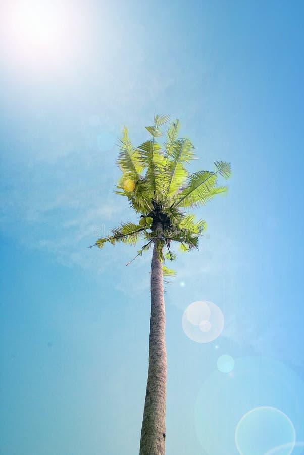 cielo azul del árbol de coco fotografía de archivo