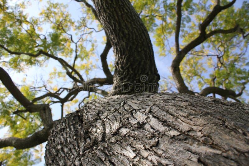 Cielo azul del árbol verde fotografía de archivo libre de regalías