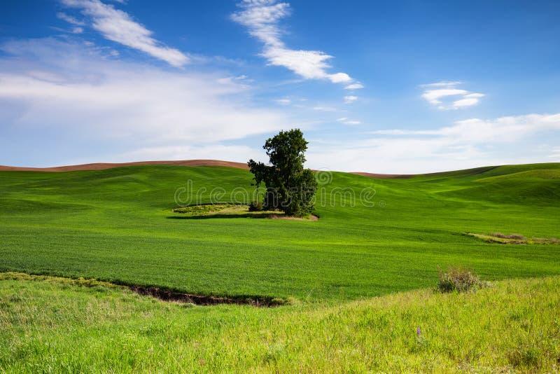 Cielo azul del campo verde fotografía de archivo