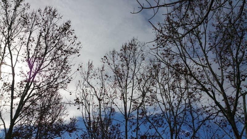Cielo azul del invierno fotografía de archivo libre de regalías