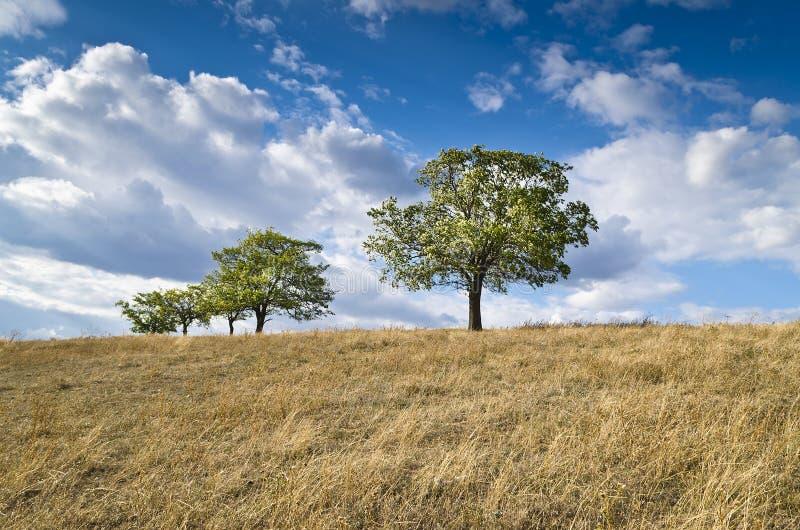 Cielo azul dramático, prado y un árbol fotos de archivo libres de regalías