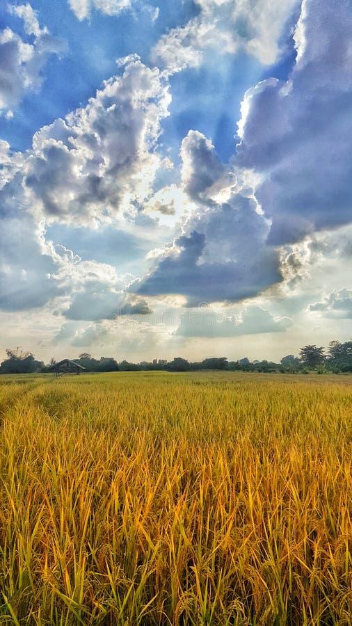 cielo azul hermoso del campo rico imágenes de archivo libres de regalías
