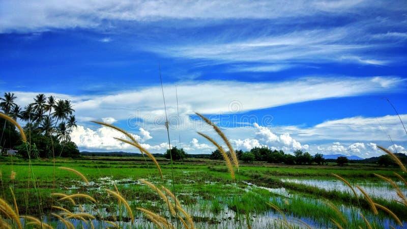 Cielo azul, hierba verde imagenes de archivo
