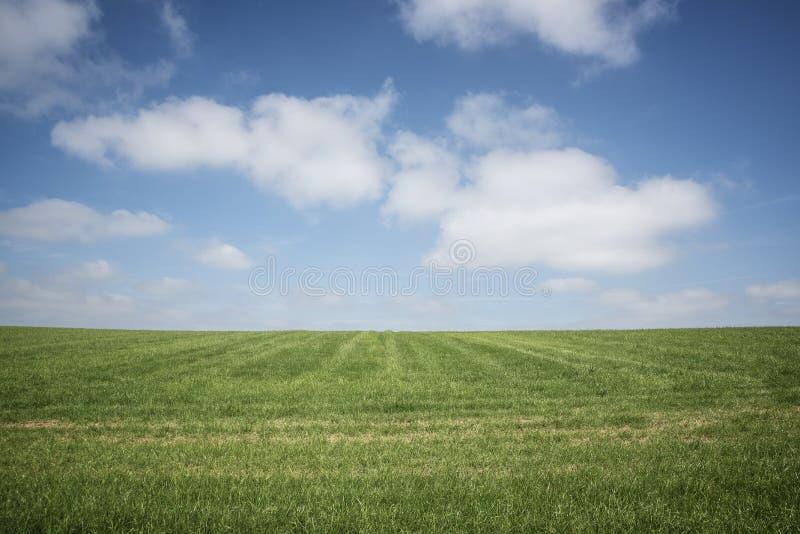 Cielo azul, hierba verde, nubes blancas foto de archivo