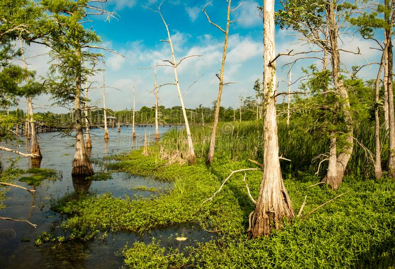 Cielo azul profundo cubierto por las nubes de cúmulo blancas sobre un camino para ennegrecer el lago bayou fotografía de archivo libre de regalías