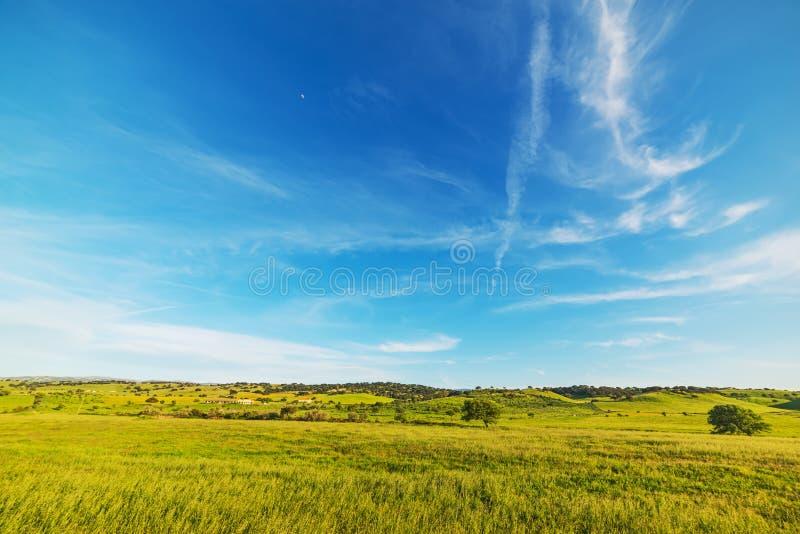 Cielo azul sobre un campo verde fotos de archivo libres de regalías