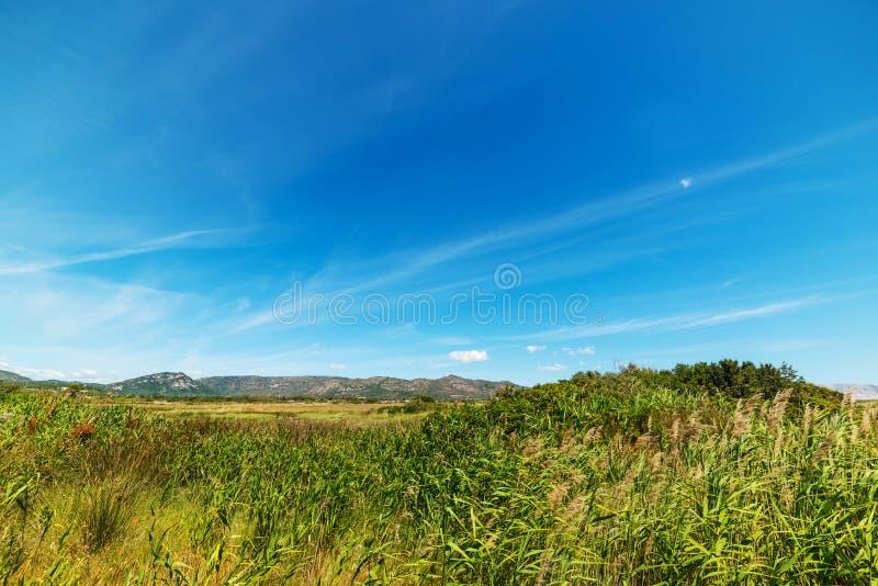 Cielo azul sobre un campo verde en Cerdeña fotos de archivo