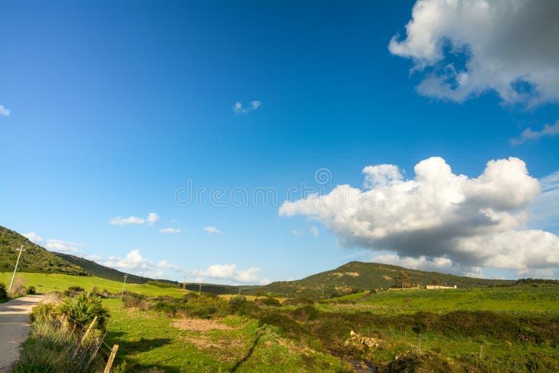 Cielo azul sobre un campo verde en la primavera fotografía de archivo