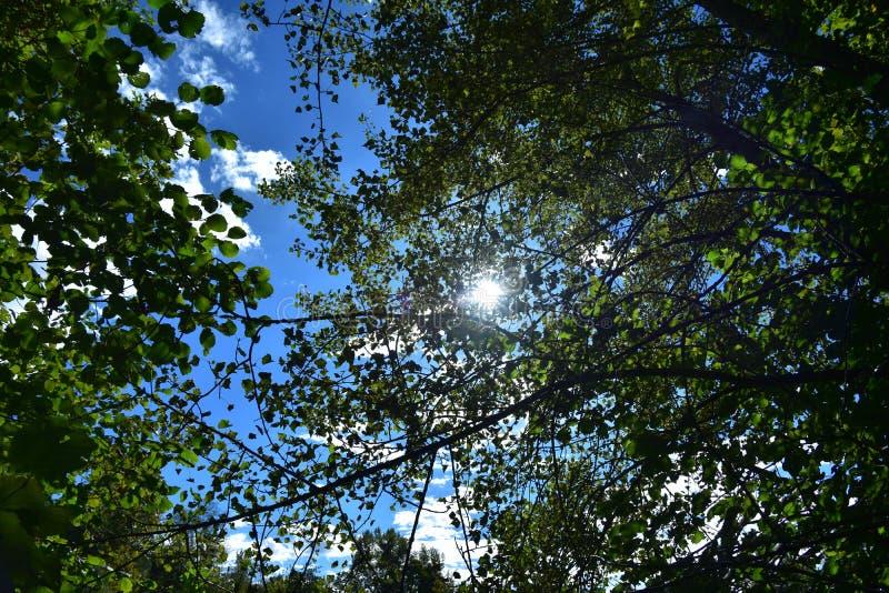 Cielo azul a través de las hojas imagen de archivo