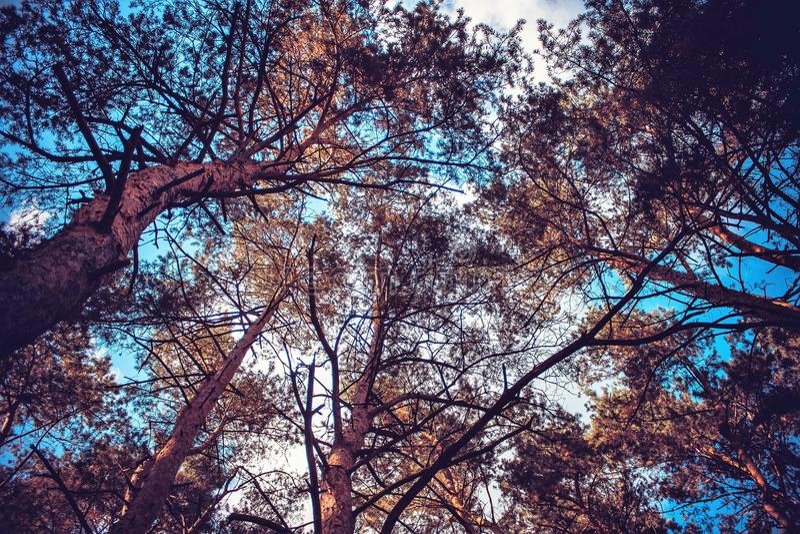 Cielo azul visible a través de las coronas de árboles imagenes de archivo