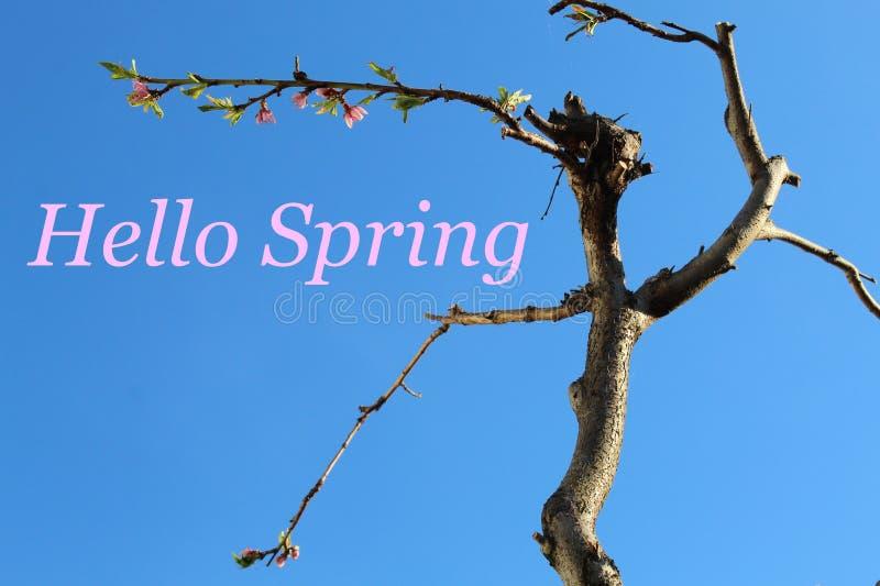 Cielo azul y árbol con el texto: Hola primavera imagen de archivo