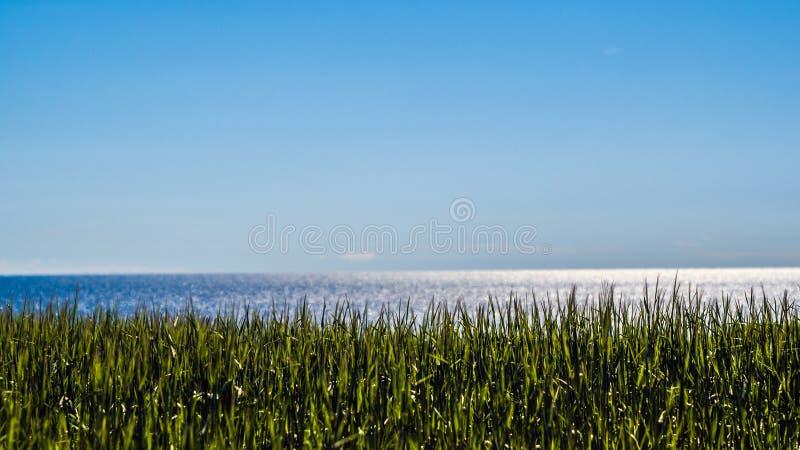 Cielo azul y campo del mar Báltico y de trigo fotos de archivo