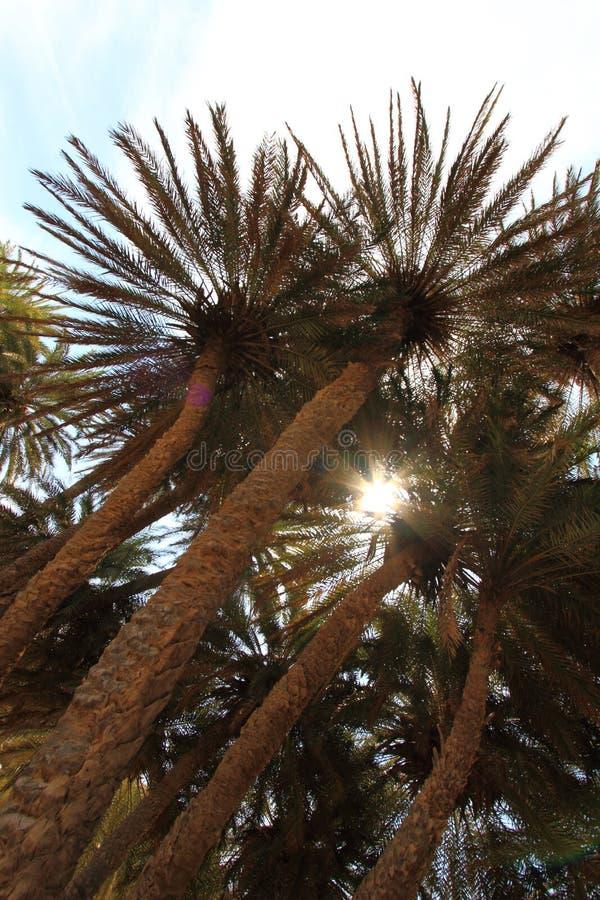 Download Cielo Azul Y Palmeras Altas Foto de archivo - Imagen de día, playa: 41906522