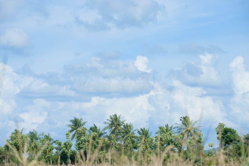 Cielo azul y primero plano de las palmeras del coco imagenes de archivo