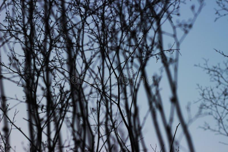 Cielo azul y ramitas fr?giles imagen de archivo