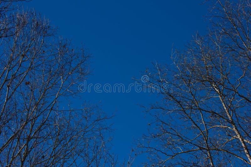 Cielo blu con il pensionante dell'albero fotografia stock