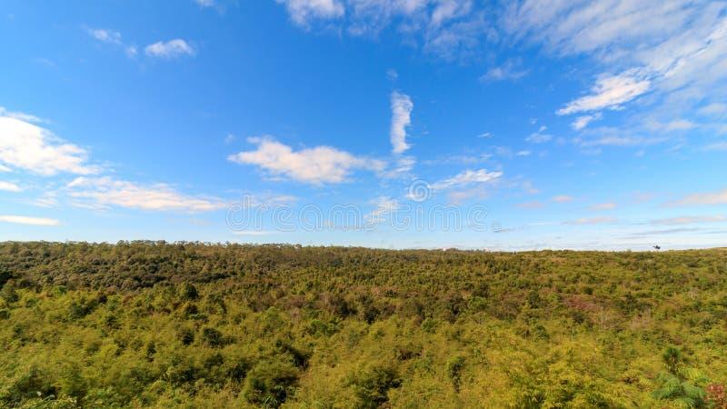 Cielo blu con la nuvola nella foresta fotografia stock