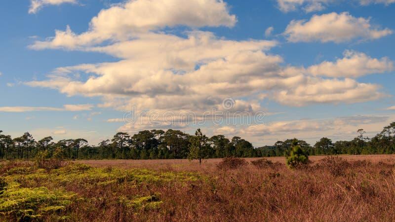 Cielo blu con la nuvola nella foresta immagini stock