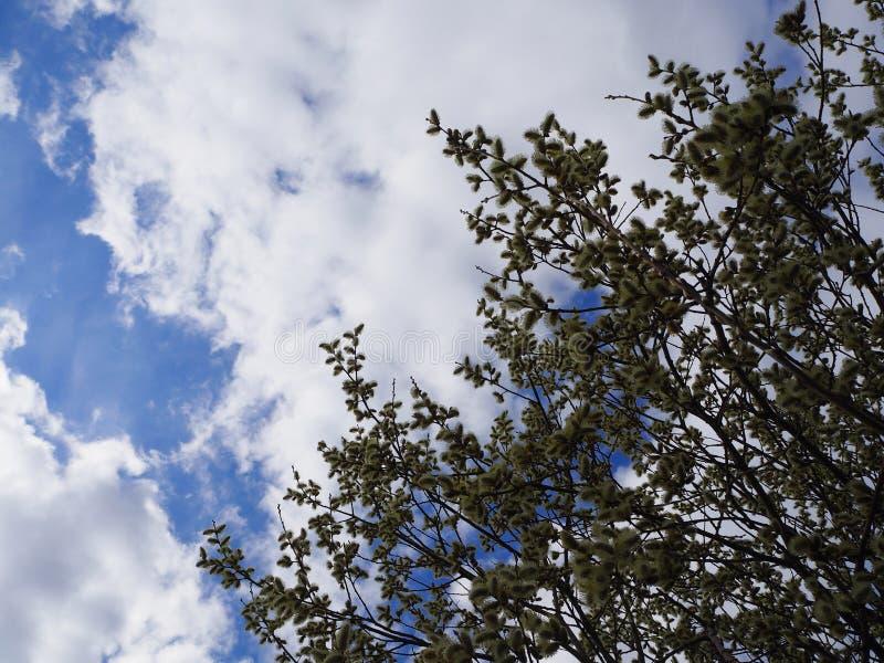 Cielo blu con le nuvole e i leafes dell'albero immagine stock