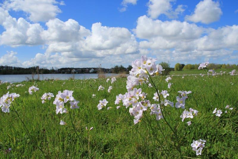 Cielo blu con le nuvole ed i crescioni dei prati nell'erba nel parco in primavera fotografia stock