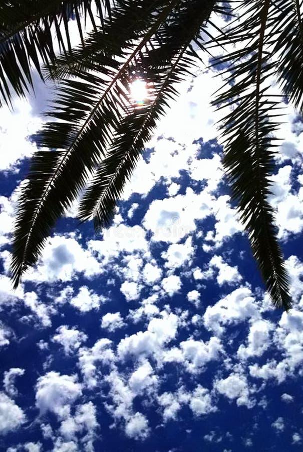 Cielo blu con le piccole nuvole bianche sopra i rami di albero immagini stock