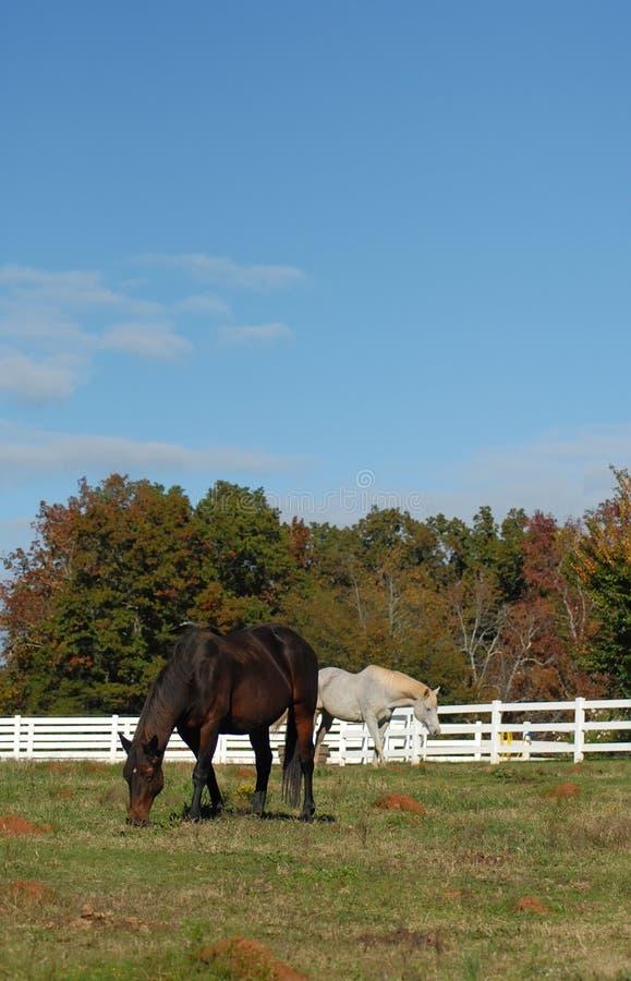 cielo blu dei cavalli fotografie stock