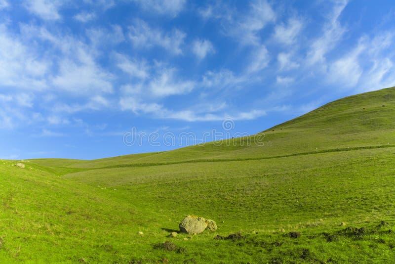 Cielo blu dell'erba verde immagini stock