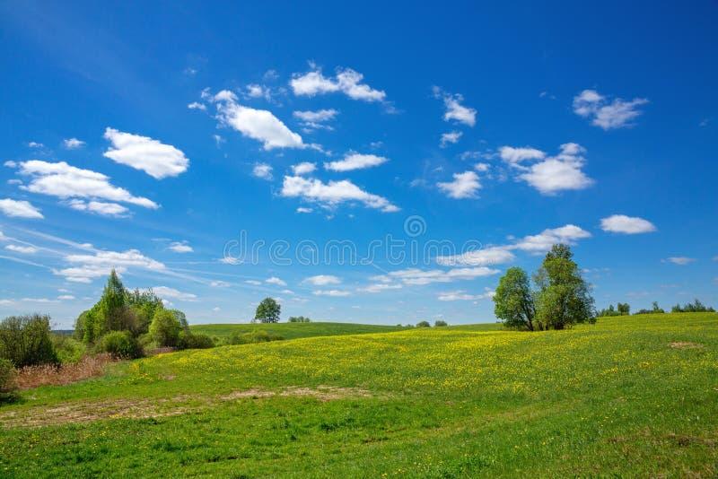 Cielo blu e campo del dente di leone, paesaggio della molla fotografia stock