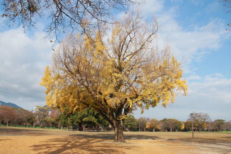 Cielo blu ed autunno in Kyushu fotografia stock