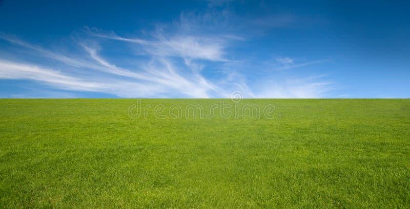Cielo blu ed erba verde fotografia stock