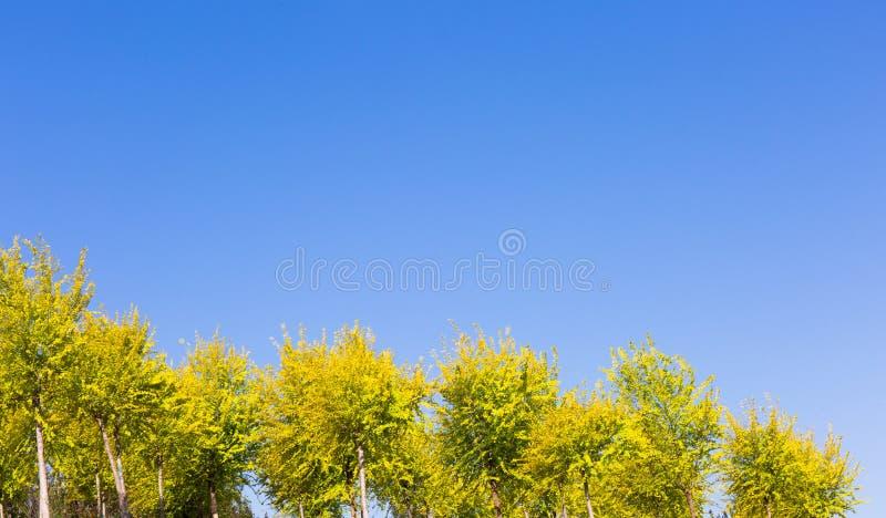 Cielo blu, foglie verdi gialle, colori della molla, cielo soleggiato immagini stock libere da diritti