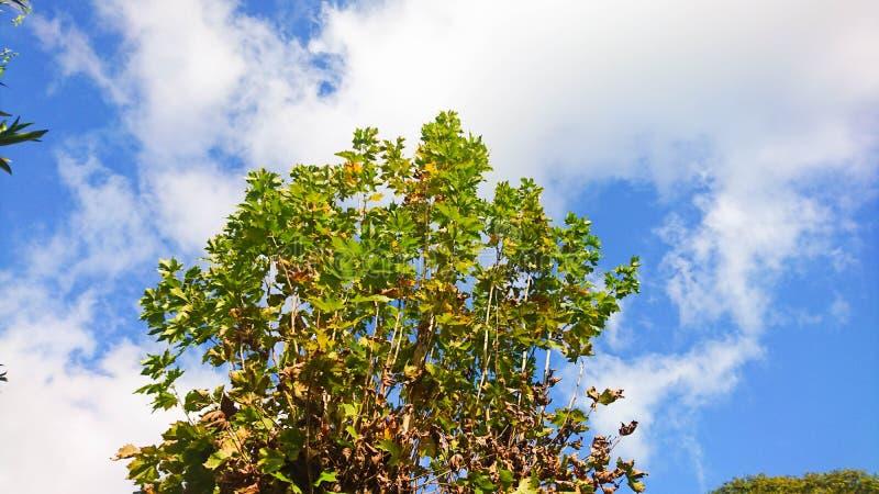 Cielo blu il giorno felice fotografia stock libera da diritti