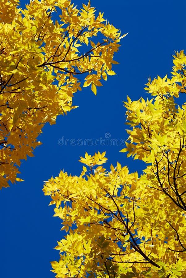 Cielo blu libero nella caduta fotografie stock libere da diritti