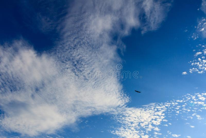 Cielo blu luminoso e bello con le nuvole e l'uccello un giorno soleggiato fotografia stock