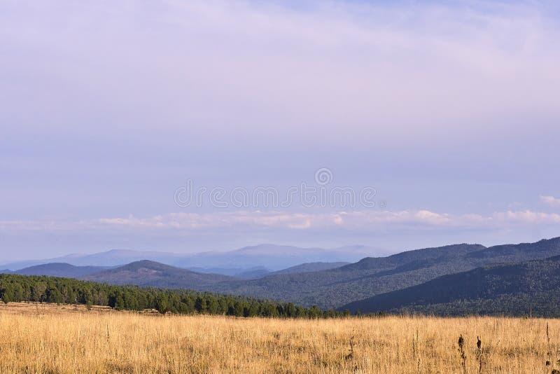 Cielo blu Montagne verdi di Forest High Campo fotografia stock