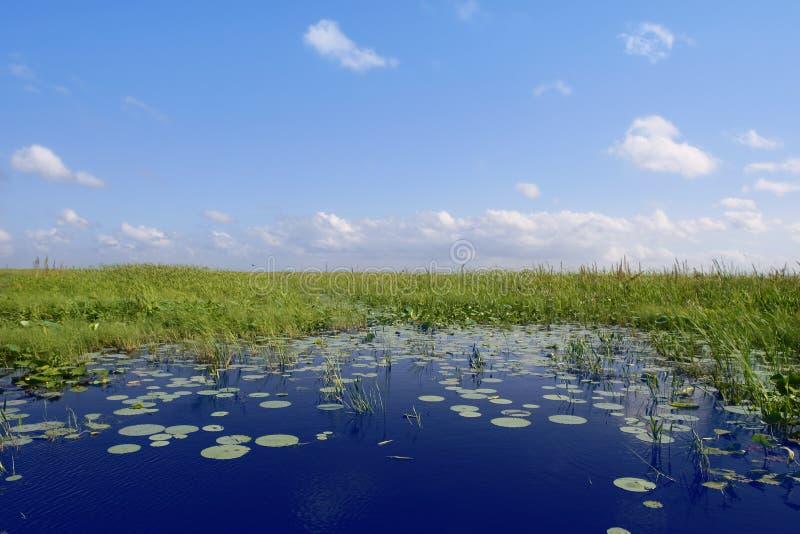 Cielo blu nel programma verde delle aree umide dei terreni paludosi della Florida immagine stock libera da diritti