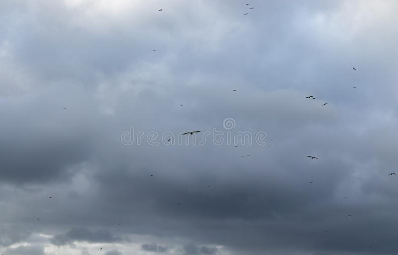 Cielo blu nuvoloso con le siluette dei gabbiani che volano in un Coruña, Galizia, Spagna fotografia stock