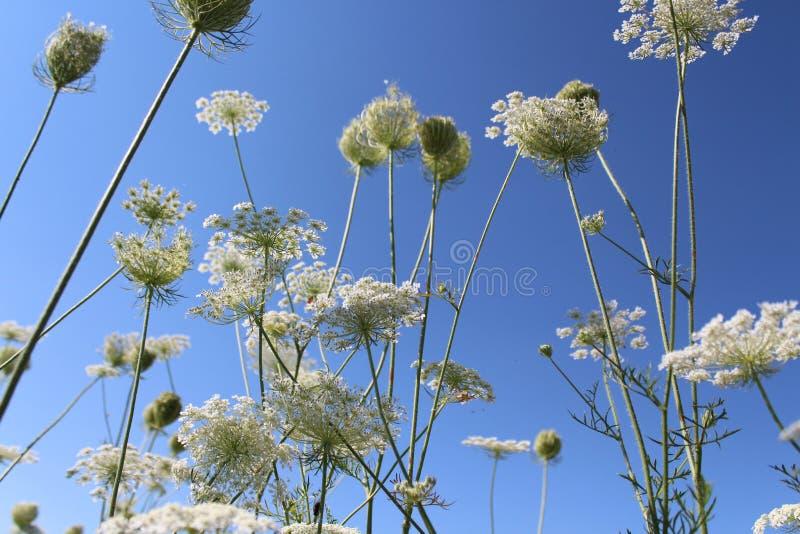 Cielo blu Piante contro il cielo Il sole di estate Le piante stanno fiorendo Umore di estate fotografie stock