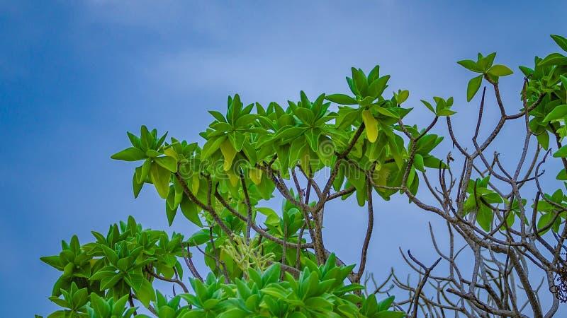 Cielo blu verde della nuvola dell'albero immagine stock