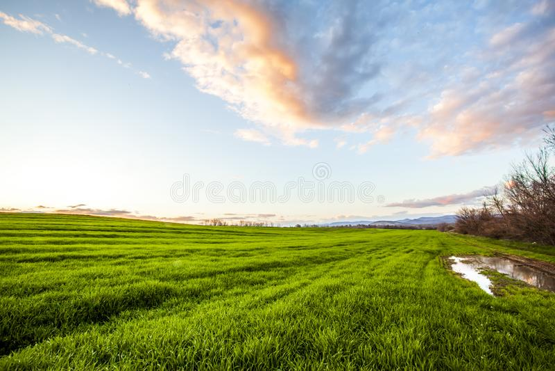 Cielo calmo di mattina con il vasto campo verde di erba e di vegetazione fresche fotografia stock libera da diritti