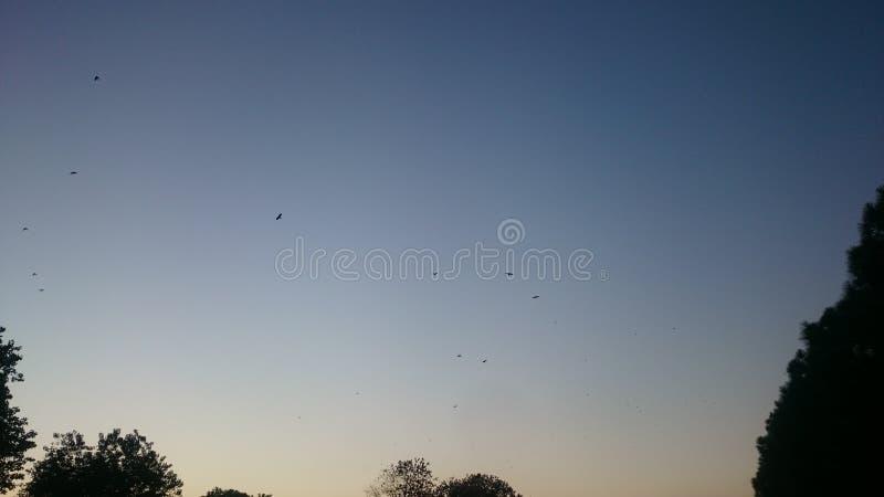 Cielo claro de la puesta del sol con los pájaros foto de archivo