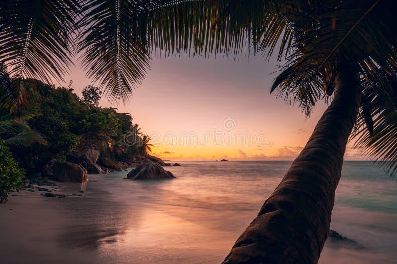 Cielo colorido del ocaso romántico hermoso de la puesta del sol en la isla del paraíso de Seychelles Playa y palmtree blancos ide fotos de archivo libres de regalías