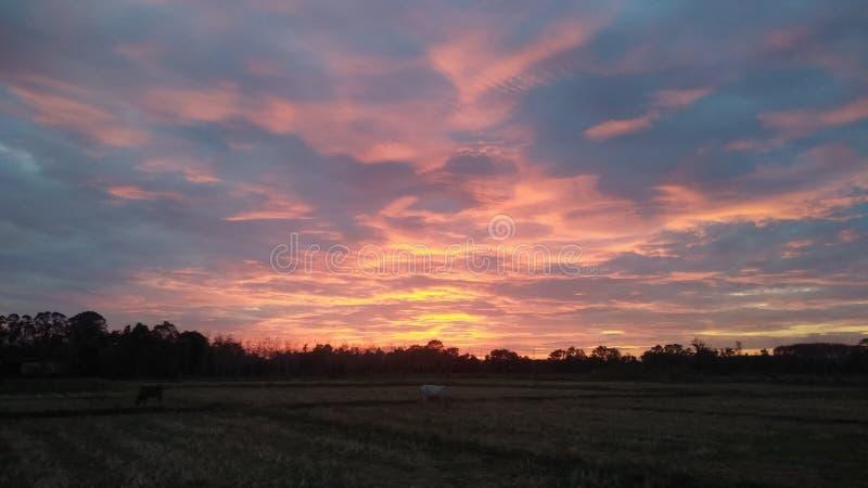 Cielo colorido en campo del arroz imagenes de archivo