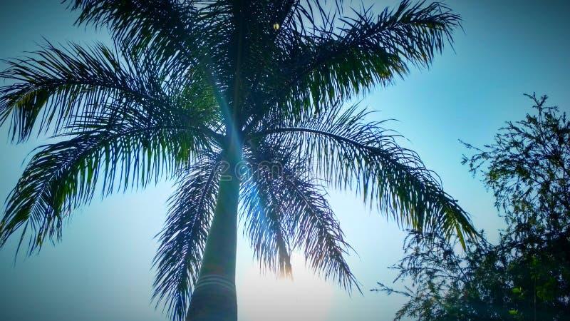 Cielo con l'albero fotografia stock