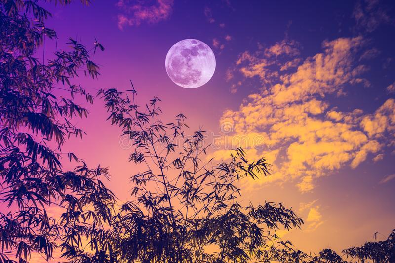 Cielo con la luna piena luminosa sopra gli alberi di bambù nella sera immagine stock