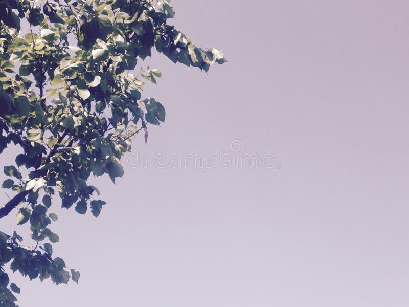 Cielo con le foglie dell'albero immagini stock